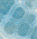 AC26-Turquoise.jpg