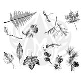 Botanical-2.25.jpg