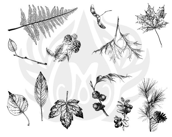 Botanical-8.25.jpg