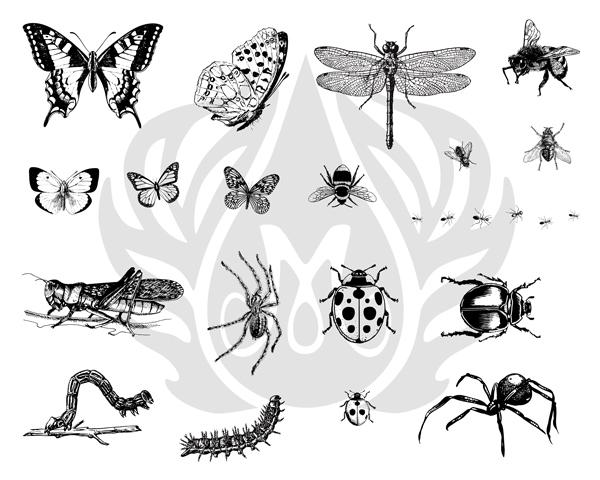 Bugs-8.25.jpg