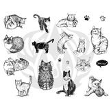 Cats-2.25.jpg