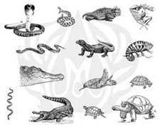 DSS135-Reptiles