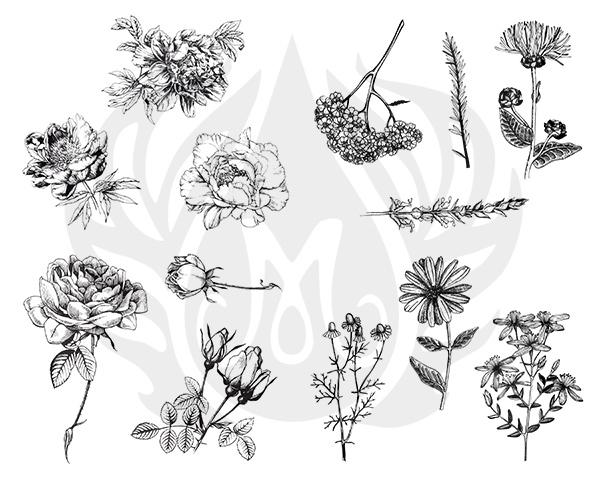 Flowers-8.25.jpg