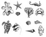 Silkscreen-Sealifesm.jpg